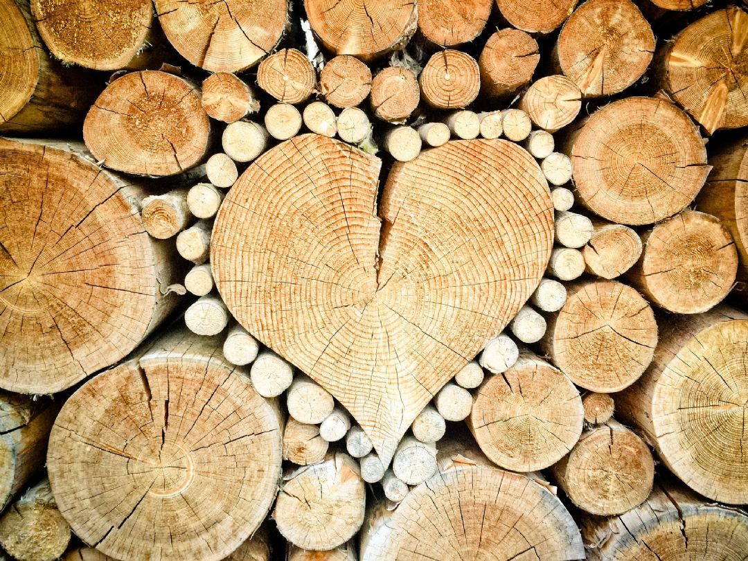 Holz als idealen Baustoff nutzen