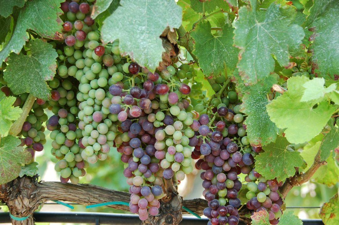 Een lekkere wijn op uw Spaanse terras